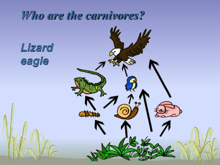 Who are the carnivores?