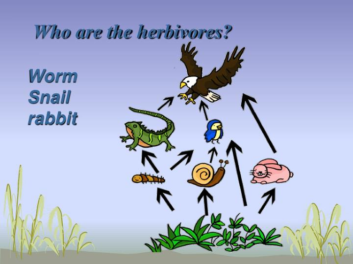Who are the herbivores?