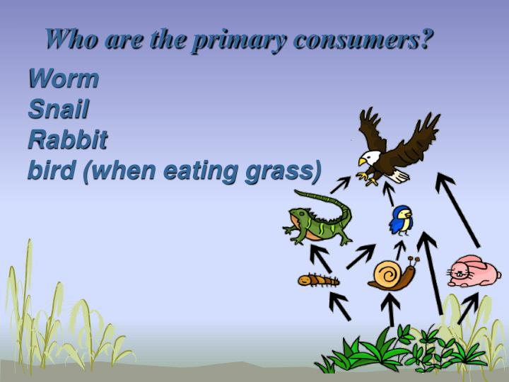 Who are the primary consumers?