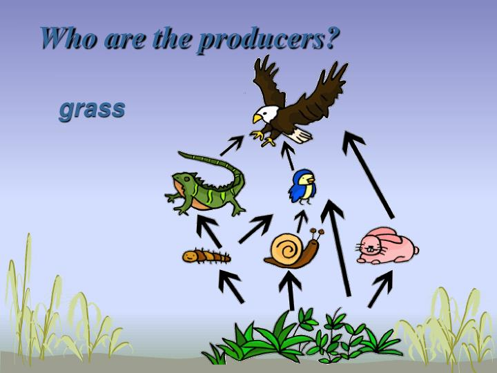 Who are the producers?