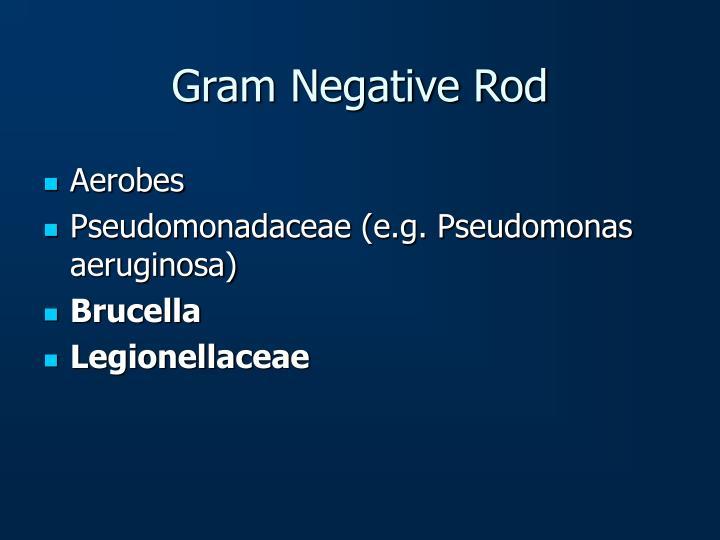 Gram Negative Rod