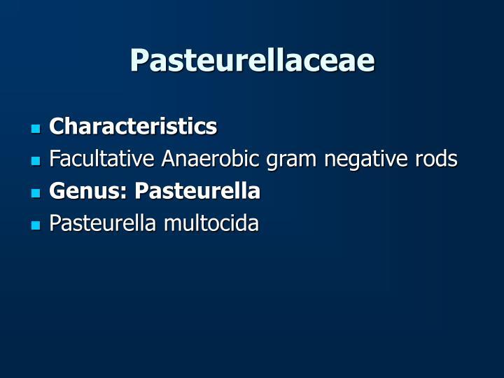 Pasteurellaceae