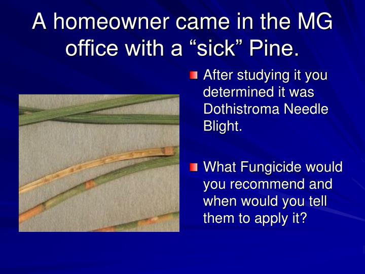 """A homeowner came in the MG office with a """"sick"""" Pine."""