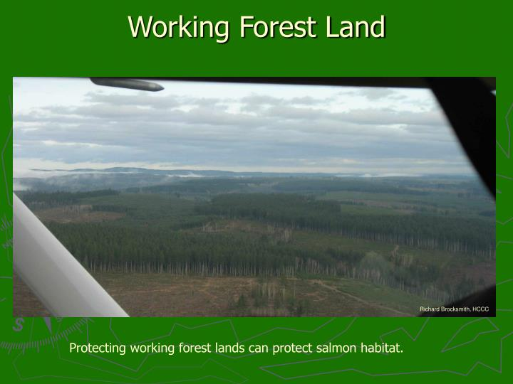 Working Forest Land