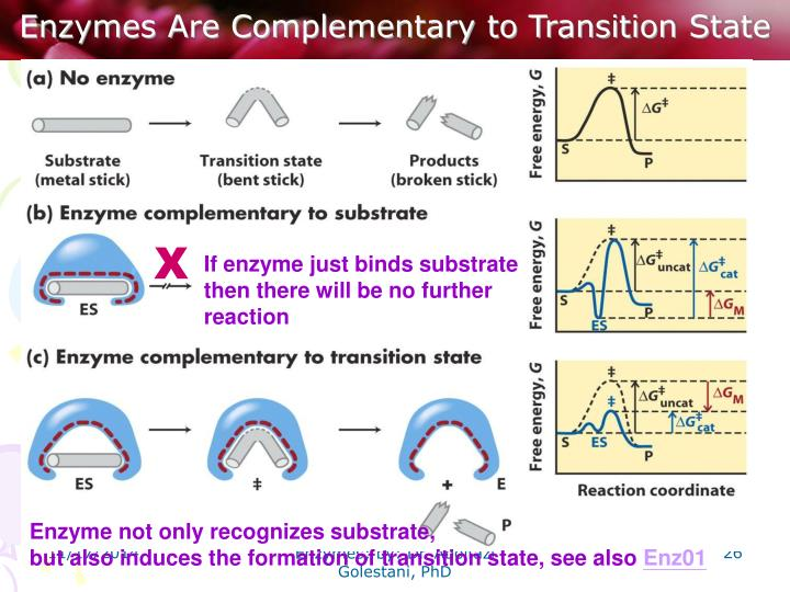 Enzymes Are Complementary to Transition State