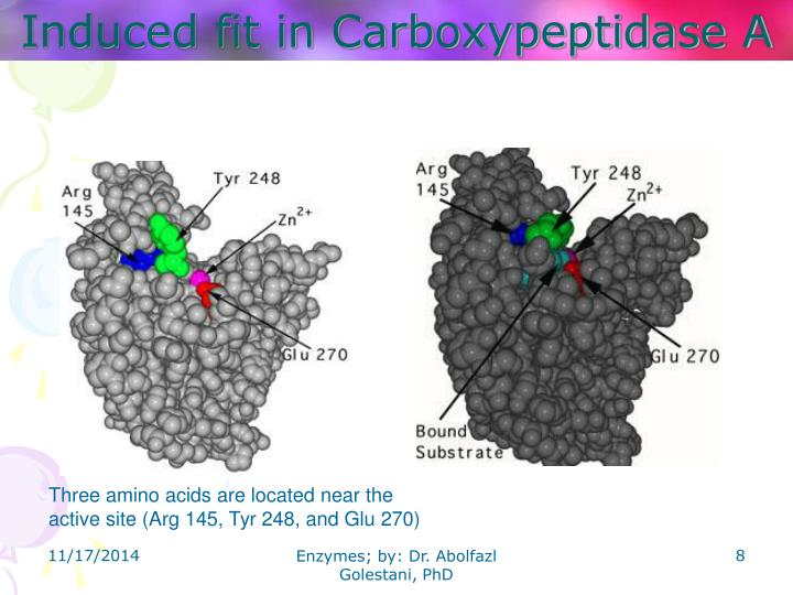 Induced fit in Carboxypeptidase A