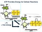 atp provides energy for cellular reactions