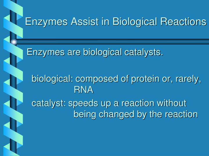 Enzymes Assist in Biological Reactions