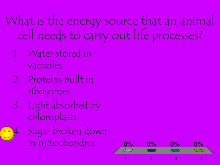 What is the energy source that an animal cell needs to carry out life processes?