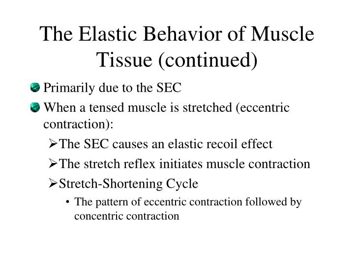 The Elastic Behavior of Muscle Tissue (continued)