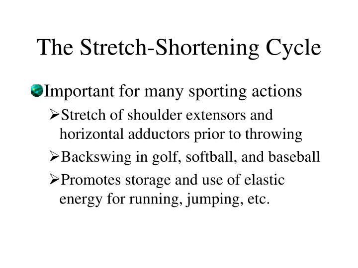 The Stretch-Shortening Cycle