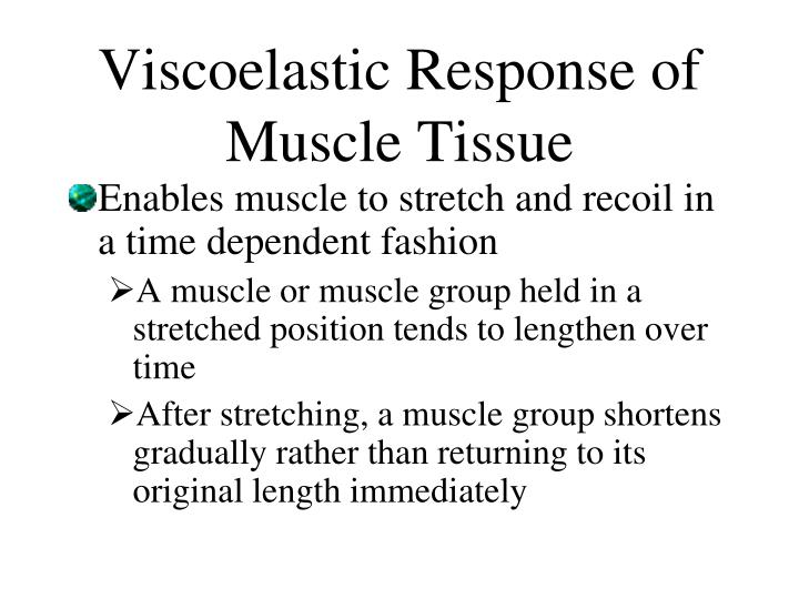 Viscoelastic Response of Muscle Tissue