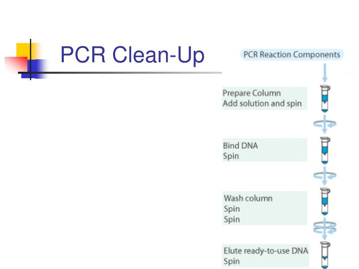 PCR Clean-Up