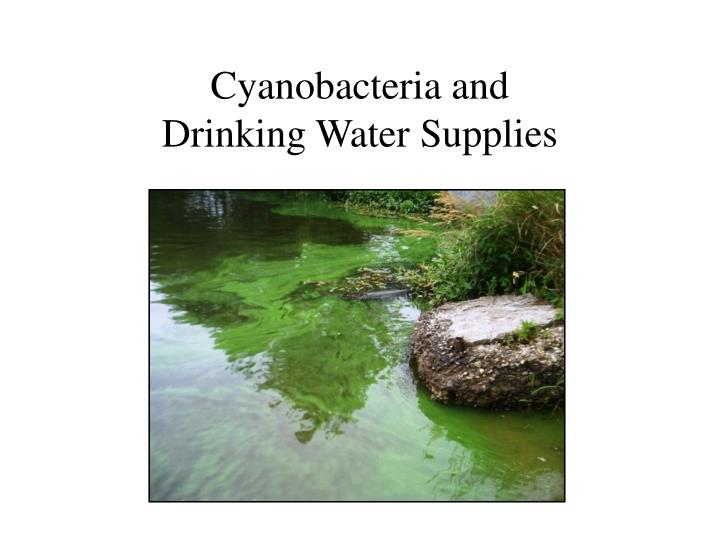 cyanobacteria and drinking water supplies