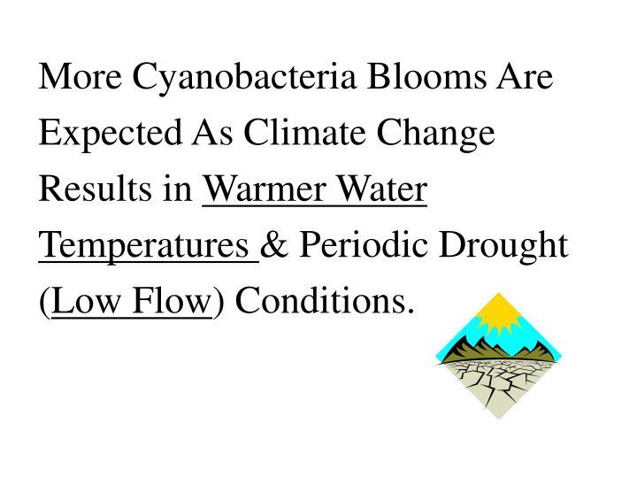 More Cyanobacteria Blooms Are