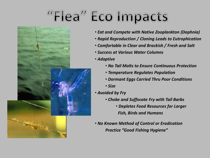 """Flea"" Eco Impacts"