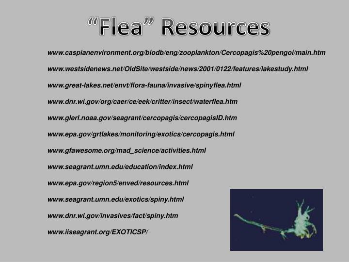 """""""Flea"""""""