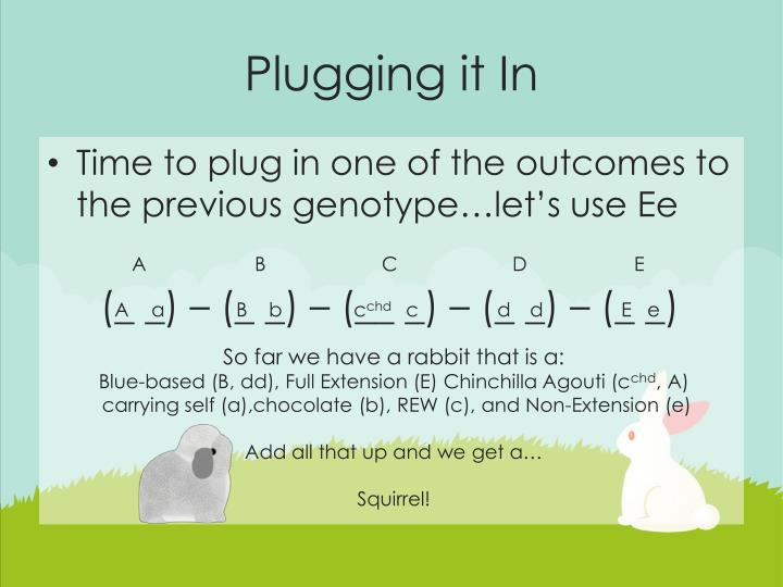 Plugging it In