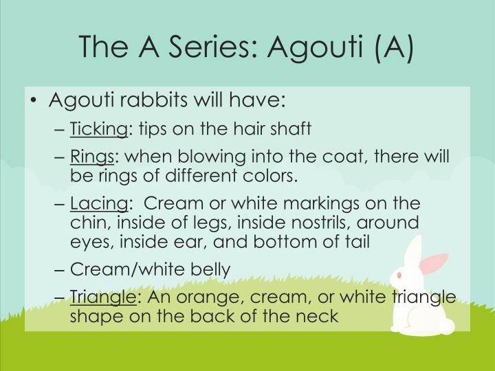 The A Series: Agouti (A)