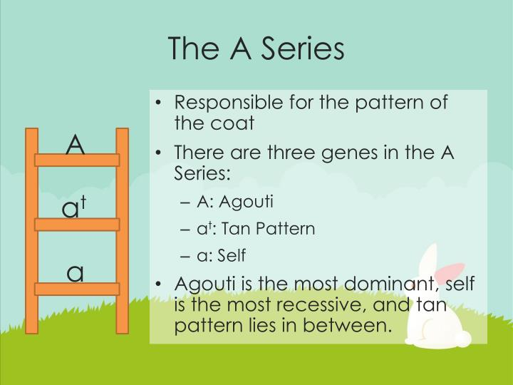The A Series