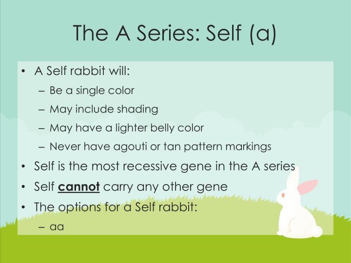 The A Series: Self (a)