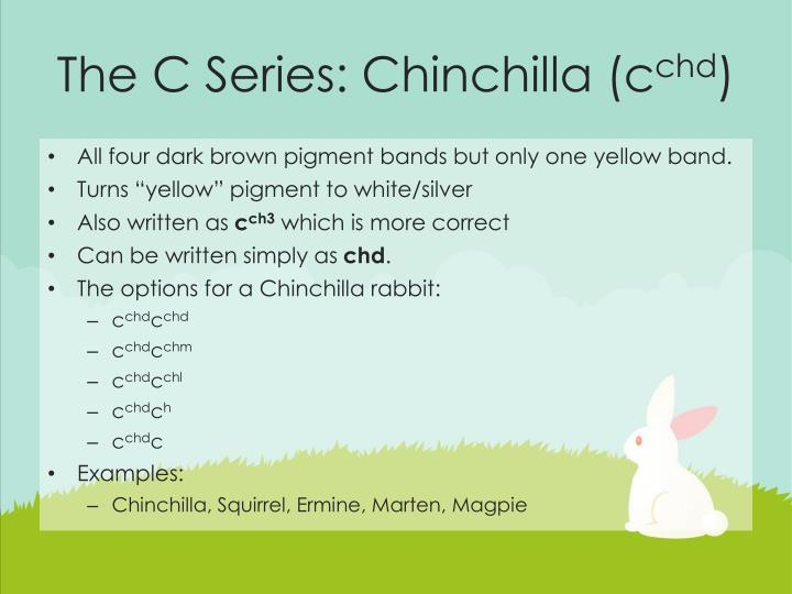 The C Series: Chinchilla (c