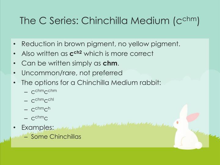 The C Series: Chinchilla Medium (c