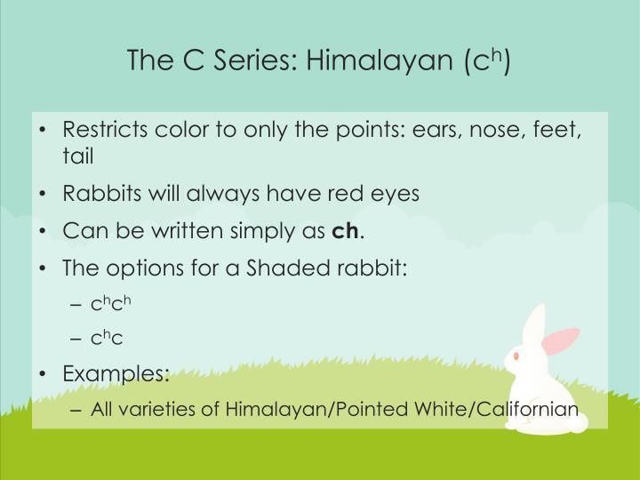 The C Series: Himalayan (c