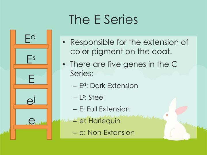 The E Series