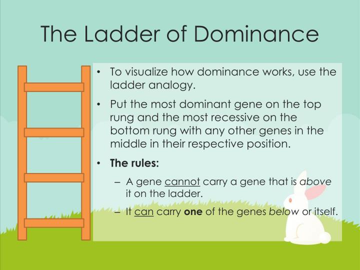 The Ladder of Dominance