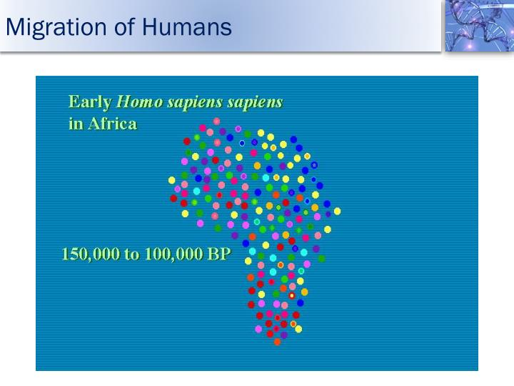 Migration of Humans
