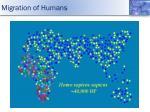 migration of humans2