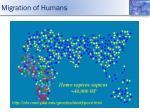migration of humans3