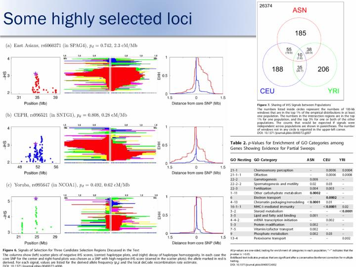 Some highly selected loci