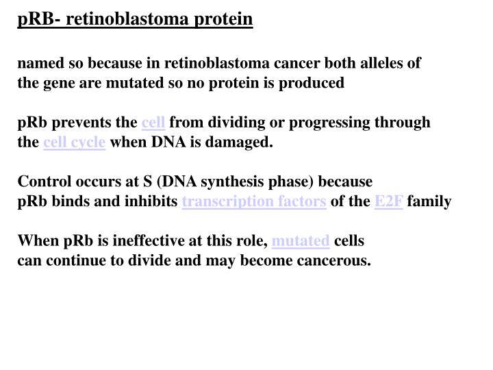 pRB- retinoblastoma protein