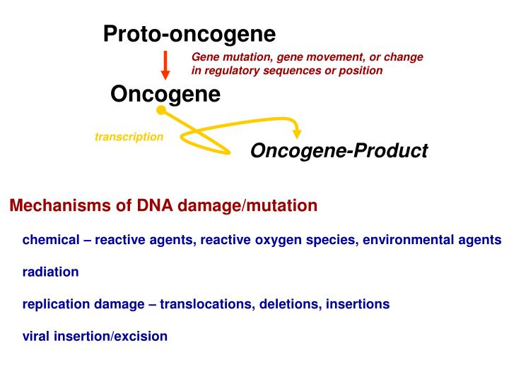Proto-oncogene