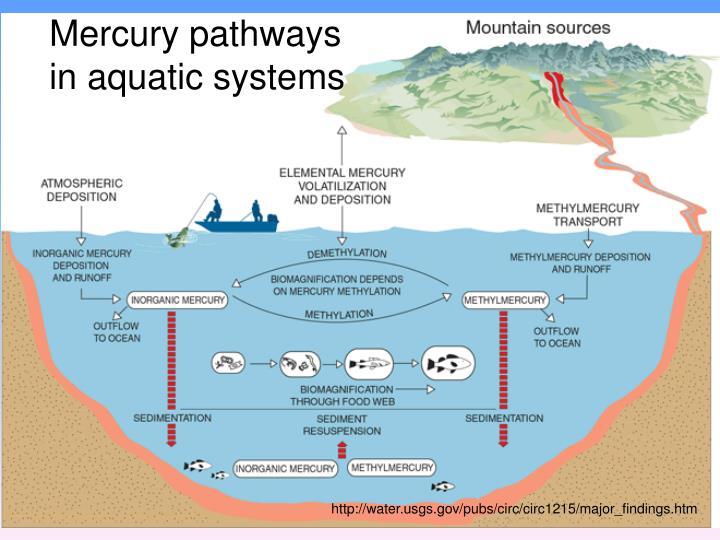 Mercury pathways in aquatic systems