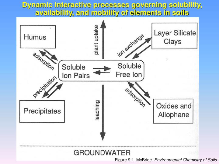 Dynamic interactive processes governing solubility, availability, and mobility of elements in soils