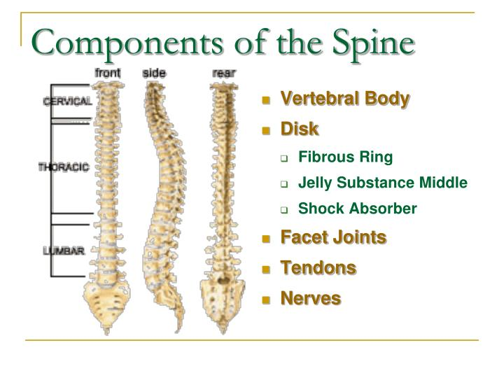 Components of the Spine