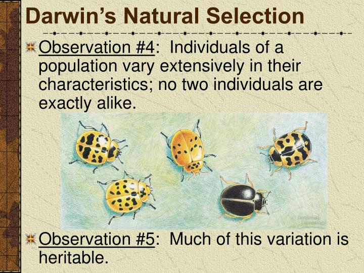 Darwin's Natural Selection