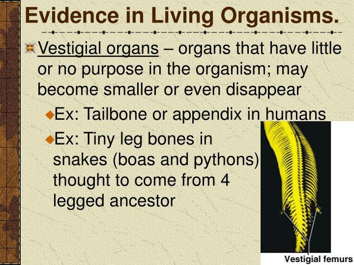 Evidence in Living Organisms.