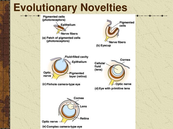 Evolutionary Novelties