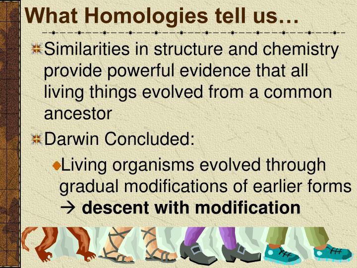 What Homologies tell us…