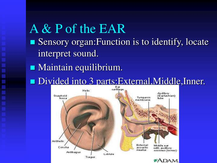 A & P of the EAR