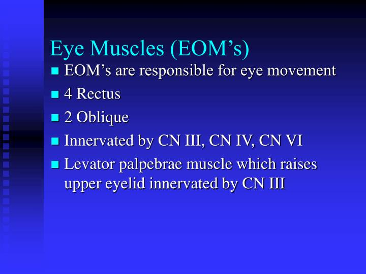 Eye Muscles (EOM's)