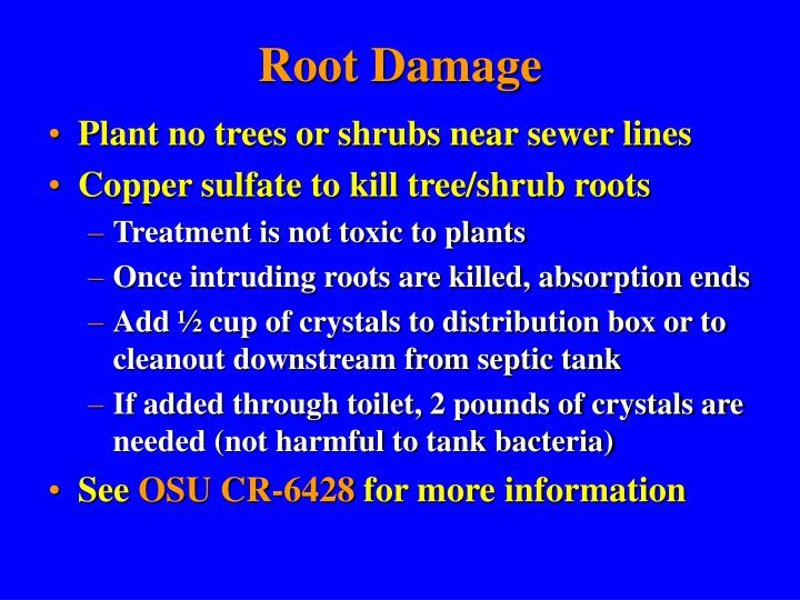 Root Damage
