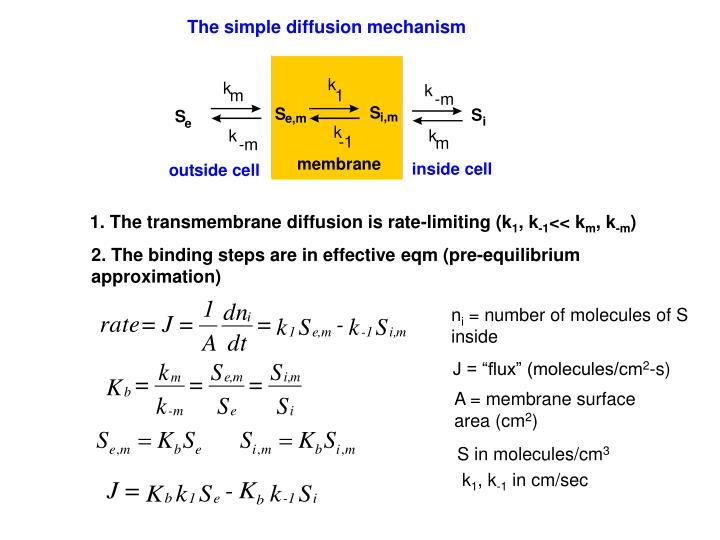 The simple diffusion mechanism