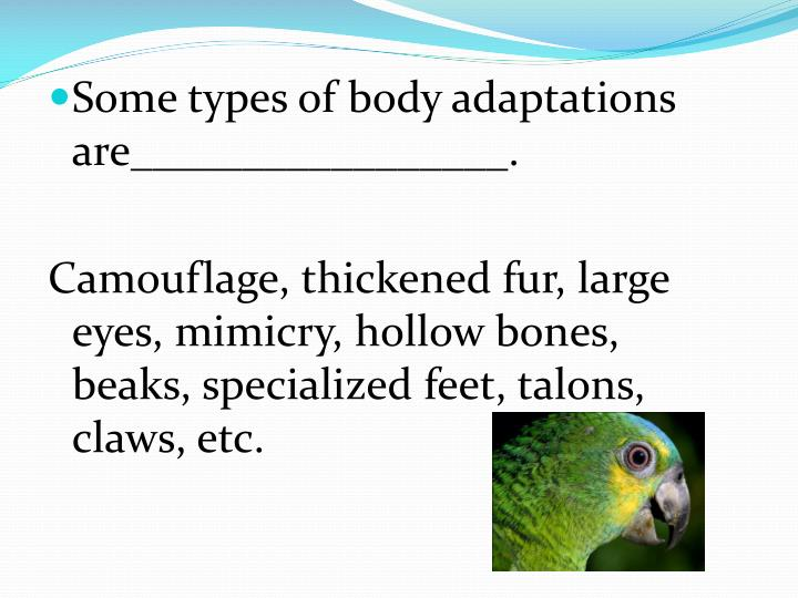 Some types of body adaptations are_________________.