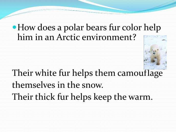 How does a polar bears fur color help him in an Arctic environment?