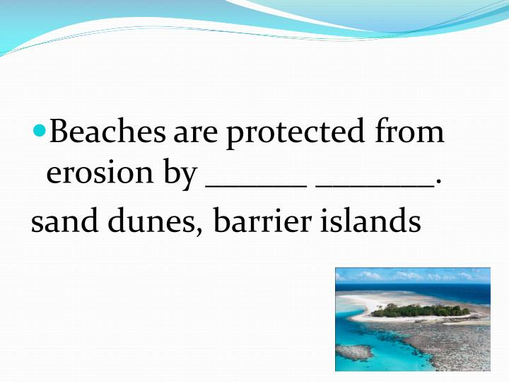 Beaches are protected from erosion by ______ _______.